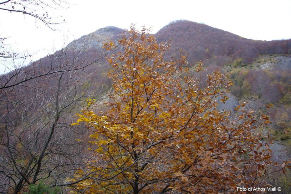Monte Grande da Fiammineda